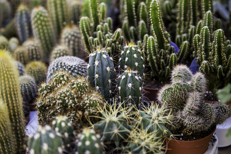 Small desert cactus in an old market, detail of plants in pots