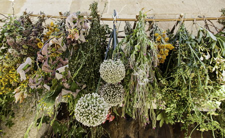 Medicinal plants drying outdoors, detail of alternative medicine Stock Photo