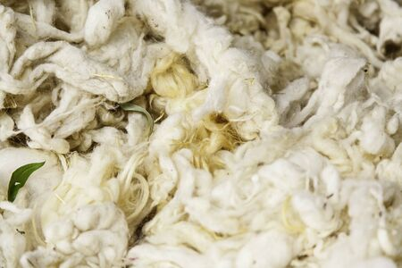 warm cloth: Detail of freshly cut virgin wool, detail of yarn and linen production Stock Photo