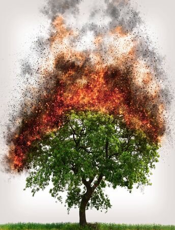 Green tree burning in flames, detail of fire and catastrophe