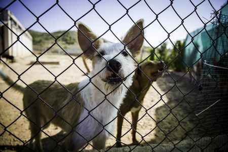Dogs abandoned and caged, pet detail seeking adoption, grief and sadness