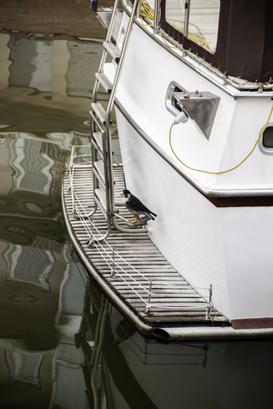 Hawk on a boat ride, bird detail on the water Stock Photo - 109113633