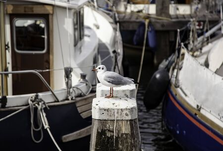 Seagull perched on a dock, detail of sea bird
