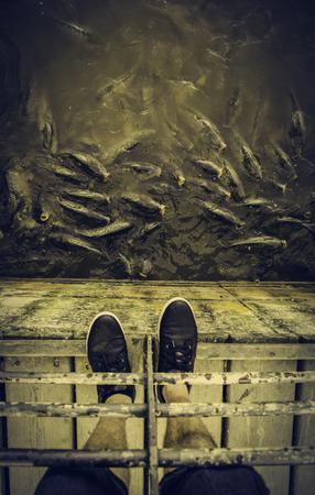 Many fish eating, wild river fish, fishing