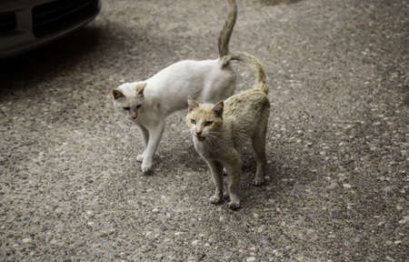 Stray cats eating in the street, detail of abandoned domestic animals Фото со стока