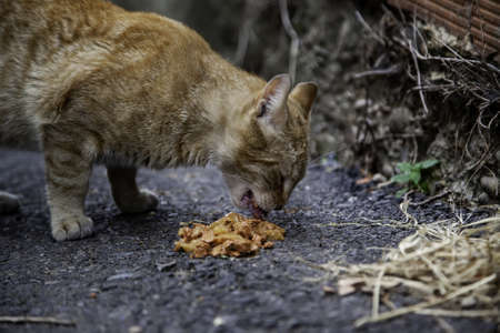 Abandoned cat eating, detail of homeless animals Фото со стока
