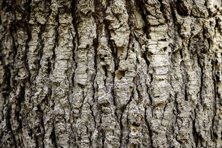 Tree bark texture, detail of tree in nature