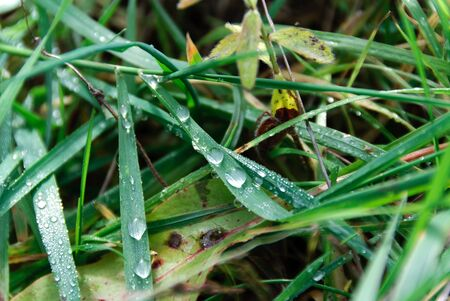 dew from the grass in the autumn photo