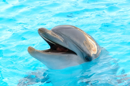dolphin with the head above water