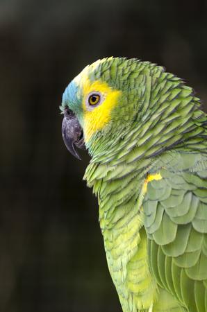 aves: parrot park das Aves in iguacu in Brazil