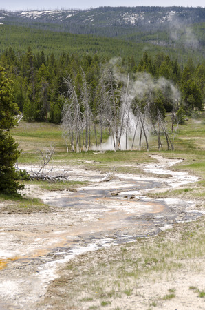 Geyser in Yellowstone National Park Stock Photo