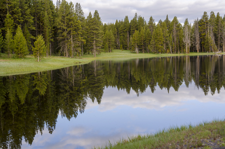 fir trees on Yellowstone Lake in Yellowstone National Park