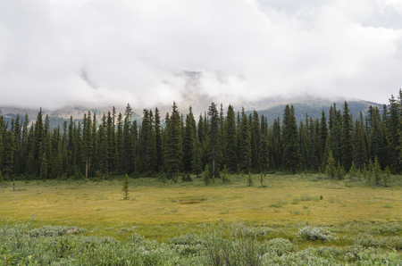 icefield: meadows and trees on the Icefield Parkway in Canada Stock Photo