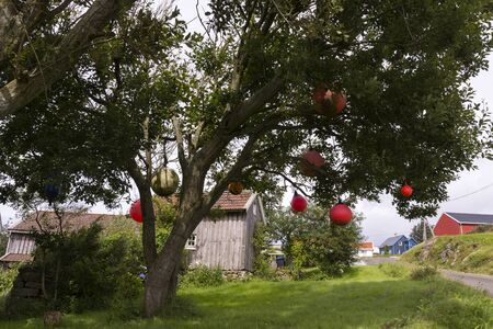 buoys: red buoys hanging from a tree in Norway Stock Photo