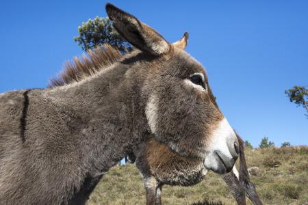donkey in the Ligurian countryside