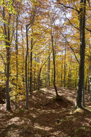 autumn colors in the woods of Liguria in Italy Stock Photo