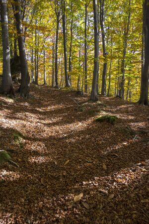 liguria: autumn colors in the woods of Liguria in Italy Stock Photo