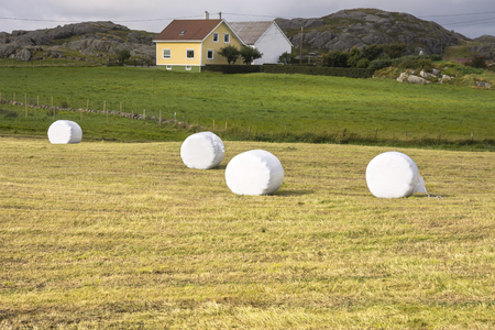 bales of hay in summer in southern Norway