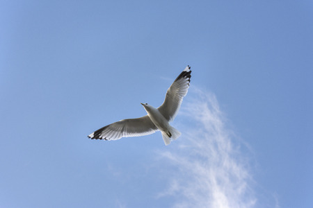 seagull on the sea in Eggum in Norway