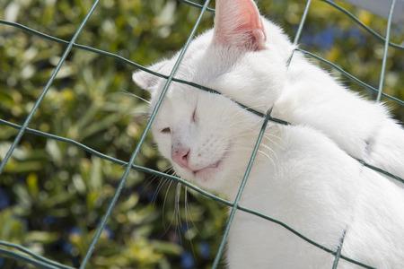 cat against a green net