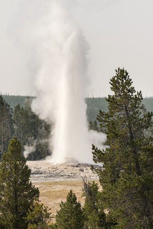 Geyser in old faithful Basin in Yellowstone National Park in Wyoming Stok Fotoğraf