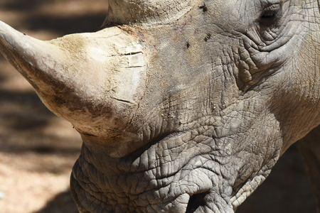 details of the parts of the body of a rhinoceros