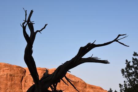 landscape in arches national park in the united states of america 免版税图像 - 126331128