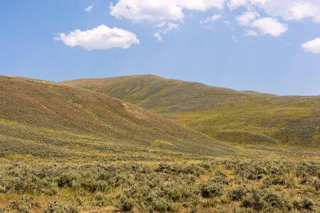 narure landscape in Lamar Valley in Yellowstone National Park on summer in Wyoming