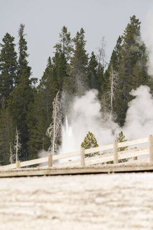 Geyser and hot spring in the old faithful basin in Yellowstone National Park in Wyoming