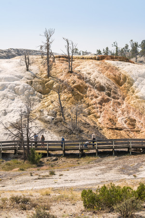 thermal springs and limestone formations at mammoth hot springs in Wyoming in America 에디토리얼