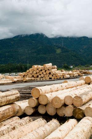 sawmill: tree logs in a sawmill Stock Photo