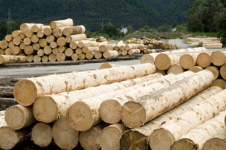 sawmill: wood logs in sawmill Stock Photo
