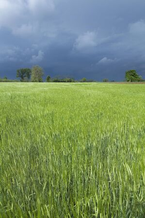 temporal: cultivated field and temporal Stock Photo