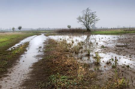 rain weather: A field inundated