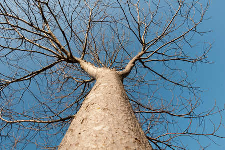 below: tree seen from below