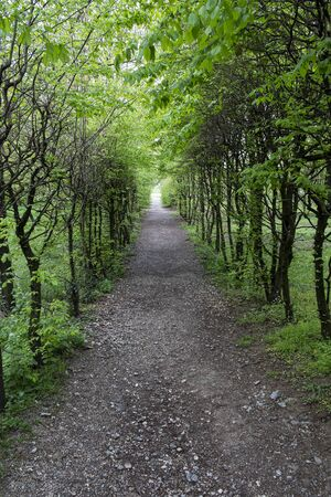 wooded path: small wooded path