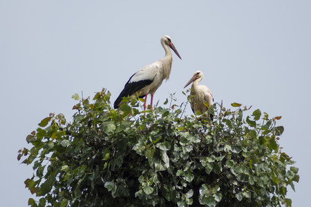 migrated: Storks in the nest