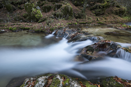 The water of a stream that flows into the woods