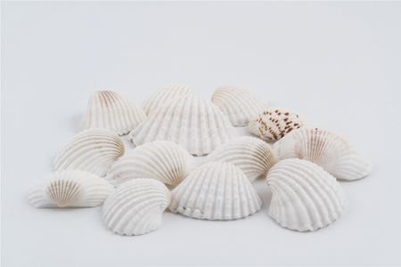 some shells on a white background Stock Photo