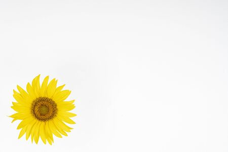a sunflower isolated on a white background