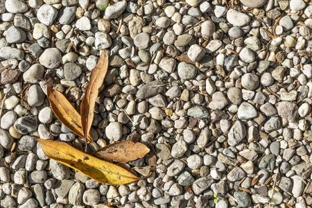 some dry leaves on the gravel of the courtyard