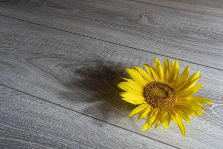 a sunflower on a wooden table Stok Fotoğraf