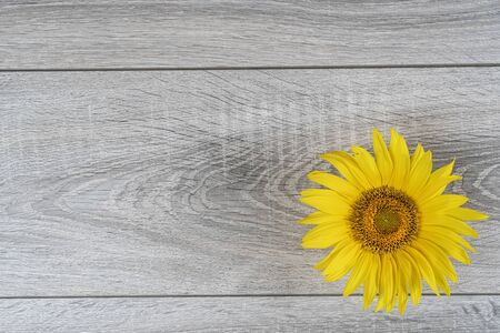 a sunflower on a wooden table Stock fotó