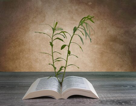 the growth of a plant from the pages of a book on a wooden table Imagens