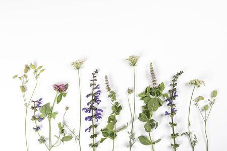 some wild flowers on a white surface
