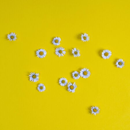 some daisies scattered on a yellow surface Banco de Imagens