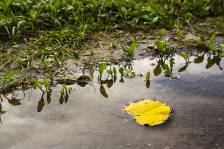 a fallen leaf in a puddle in autumn
