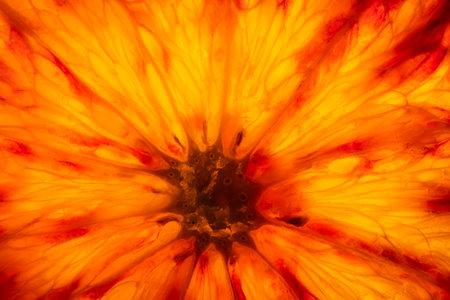 Macro view of the transparent light of an orange slice Standard-Bild - 162574020
