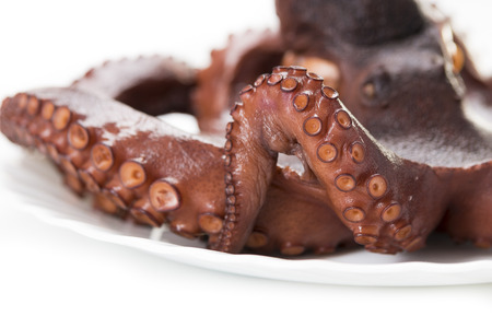 feelers: the beautiful boiled octopus was photographed in studio on a white background Stock Photo