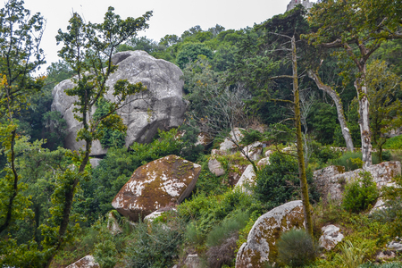 national forest: Ancient Forest - Green forest landscape with stones and boulders.